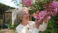 senior woman looks at and smells cherry tree blossom and smiles in her garden - stock footage