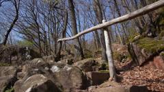 Nature, trees (camera slider) Stock Footage