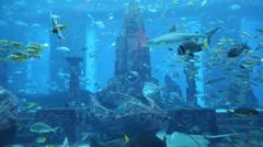 Stock Video Footage of Large aquarium in Hotel Atlantis in Dubai