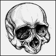 Stock Illustration of Skull
