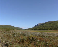 Marsh and peat landscape in a lower valley of mountainous area around Rondane Stock Footage