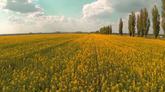 Fast flying low over the flowering yellow field. Aerial. - stock footage