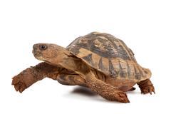 Turtle walking Stock Photos