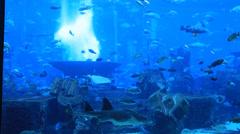 Large aquarium in Hotel Atlantis in Dubai Stock Footage