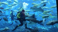 Stock Video Footage of Large aquarium in Hotel Atlantis  in Dubai, United Arab Emirates.