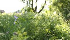 The meadow with wild flowers in the country, sunlight, camera moving Stock Footage