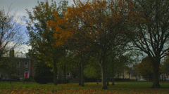 Autumn leaves in a park II Stock Footage