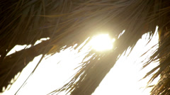 Beach sunset with coconut palm tree leaves silhouettes. Closeup palm tree leaves - stock footage