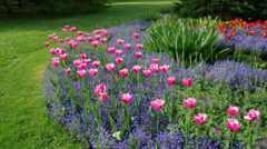 Bed of colorful tulips Stock Footage