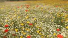 Amazing field full of flowers spring background colorful nature happy emotion Stock Footage