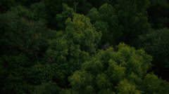 Aerial shot of woodland - stock footage