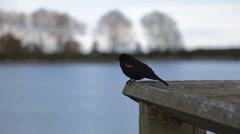 Bird at the lake Stock Footage