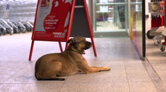 Dog waiting for owner outside of grocery store Stock Footage