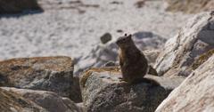 Wild squirrel sitting on rock 4k Stock Footage