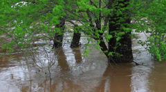 1498 Fast Moving River at Flood Stage Flooding with Trees Stock Footage