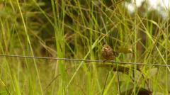 Bird on wire Stock Footage