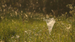 Stock Video Footage of Cobweb on the grass in the meadow in the morning, calm atmosphere
