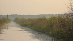 The channel near the meadow in the mist in the morning, forest, camera moving Stock Footage