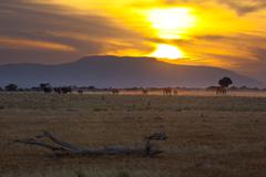 sunset and landscape in tsavo east national park - stock photo