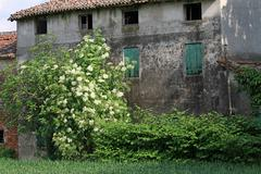 Abandoned country house with the uncultivated garden Stock Photos