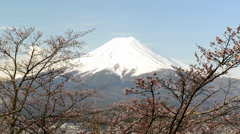 Mt. Fuji with cherry blossom - stock footage