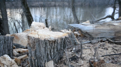 Tree stumps near the river Stock Footage