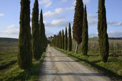 Cypresses Stock Photos