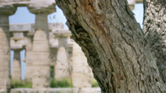 Tree Ants Ancient Greek Temple HDR - 25FPS PAL Stock Footage