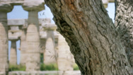 Stock Video Footage of Tree Ants Ancient Greek Temple HDR - 25FPS PAL