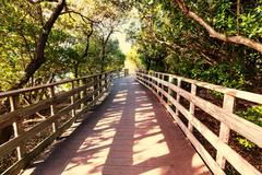 boardwalk in swamp - stock photo