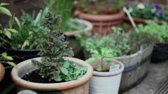 Watering Mini Christmas Tree in Garden Stock Footage