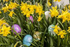 Easter eggs hidden among small flowering daffodils. Stock Photos