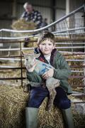 Children and new-born lambs in a lambing shed. Stock Photos