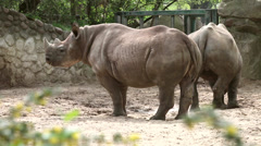 Two rhino in the zoo Stock Footage