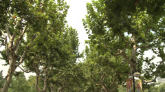 Large crowd dancing under trees 10 Stock Footage