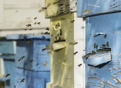 swarm of bees fly to beehive - stock photo