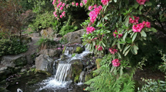 Waterfall in Garden with Rhododendron Flowers Blooming in Spring 1080p Stock Footage