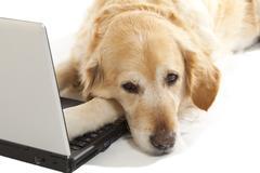 Dog with a laptop Stock Photos