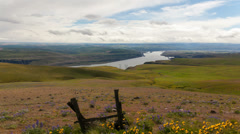 Columbia River Gorge with Wild Flowers and Clouds in Maryhill Washington Stock Footage