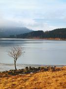 Winter view over lake with thin blue ice.Bended rowan tree on the bank Stock Photos