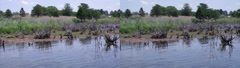 3d geese swimming in a lake Stock Footage