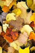Leaves fallen winter nature ground autumn season change dew drops Stock Photos