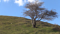Isolated Tree on Green Grass Meadow on Top of a Mountain, Tale, Story Landscape Stock Footage