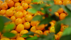 Mandarines lie on a counter Stock Footage