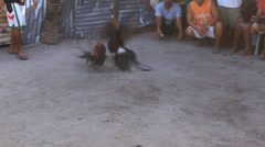 Traditional cock fighting in island Malapascua, Philippines Stock Footage