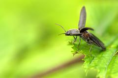 Takeoff a beetle Stock Photos