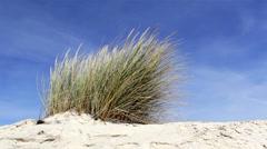 Beachgrass - Ammophila arenaria C - Algarve Stock Footage