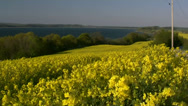 Stock Video Footage of Rape Seed Field on Rugen Island - Baltic Sea Coast, Northern Germany
