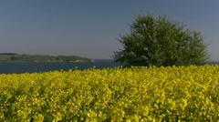 Rape Seed Field on Rugen Island - Baltic Sea Coast, Northern Germany Stock Footage