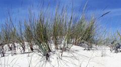 Beachgrass - Ammophila arenaria A - Algarve Stock Footage